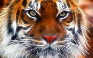 3D Tiger Wallpaper HD