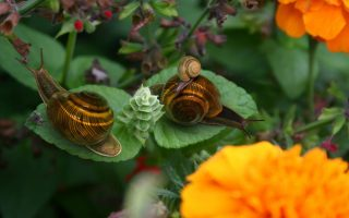 Amazing Snails Family