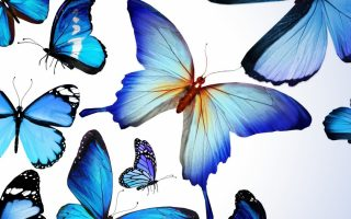 Blue Butterflies Wallpaper iPhone