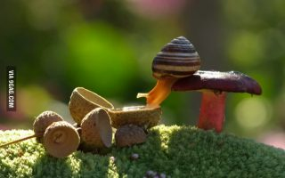 Snail Drinking Water Wallpaper