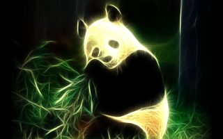Cute Panda Pictures Wallpaper