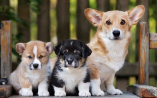 Best Puppies Wallpaper HD With Resolution 1920X1080