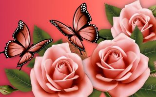 Pink Butterfly Desktop Backgrounds With Resolution 1920X1080
