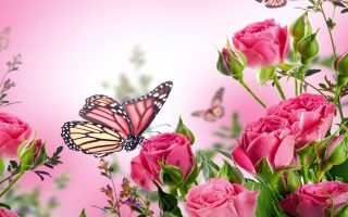 Pink Butterfly Wallpaper HD With Resolution 1920X1080